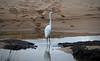 Egret w
