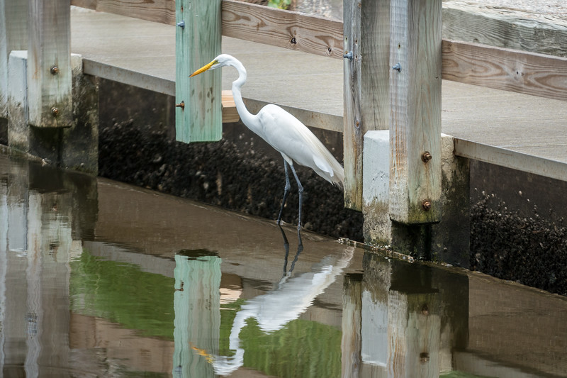 Egret by the Bridge