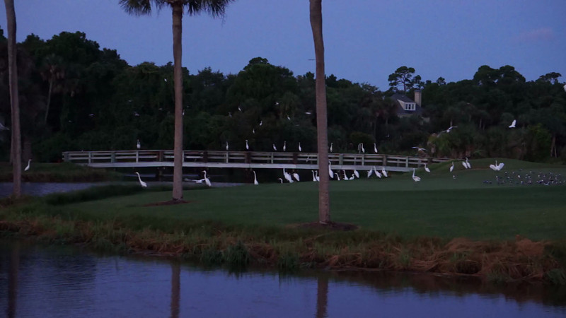 Birds on Bufflehead Pond