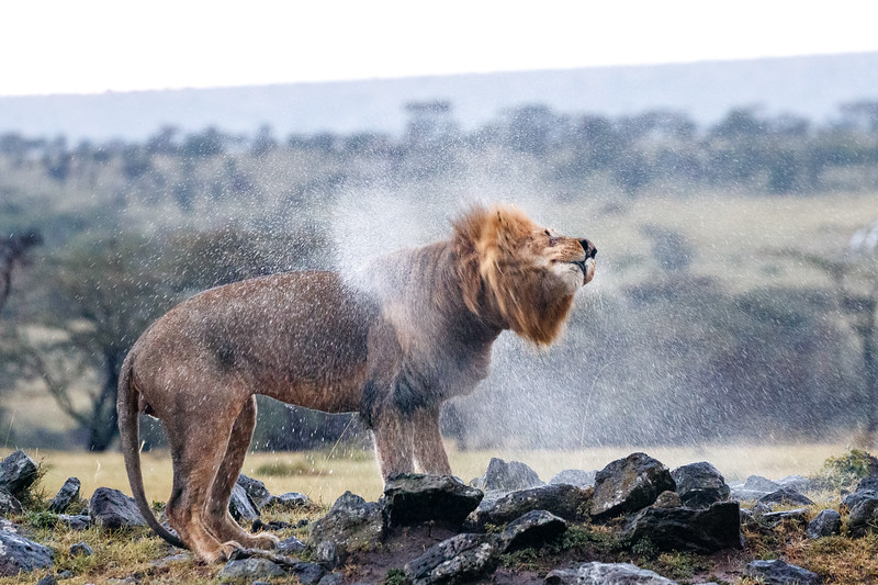 Having a good shake once the rain had eased