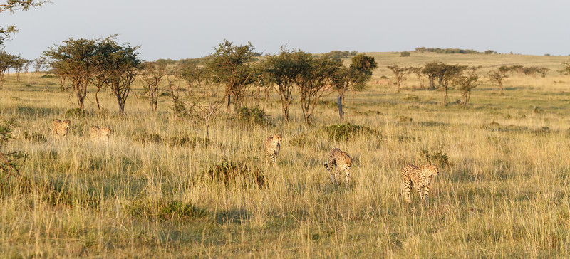 Heading towards the herd of zebra