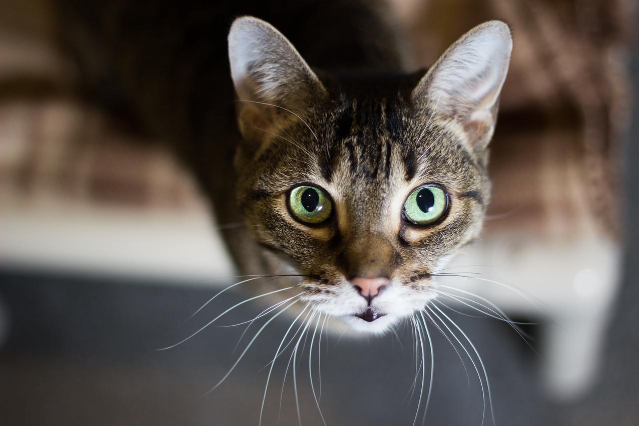 Grand Rapids, MI cat photography