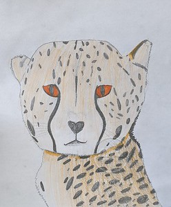 Ghazia's Animal Kingdom Craft!