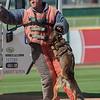 Desert Dog Trials 2016 -152