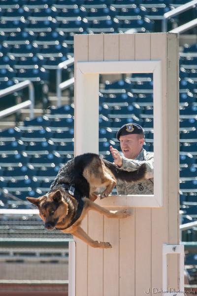 Desert Dog Trials 2016 -78