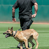 Desert Dog Trials 2016 -106