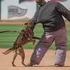 Desert Dog Trials 2016 -164
