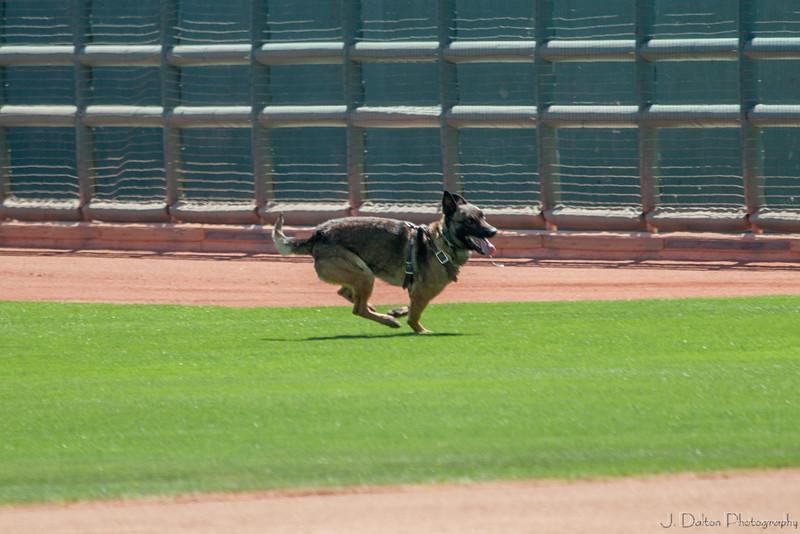 Desert Dog Trials 2016 -68