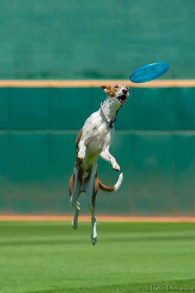 Desert Dog Trials 2016 -115