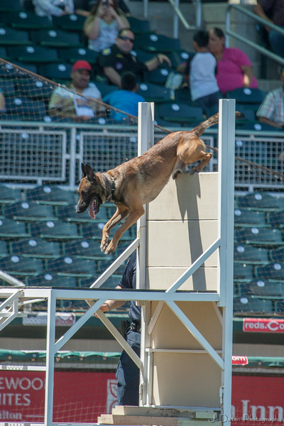 Desert Dog Trials 2016 -134