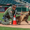 Desert Dog Trials 2016 -100