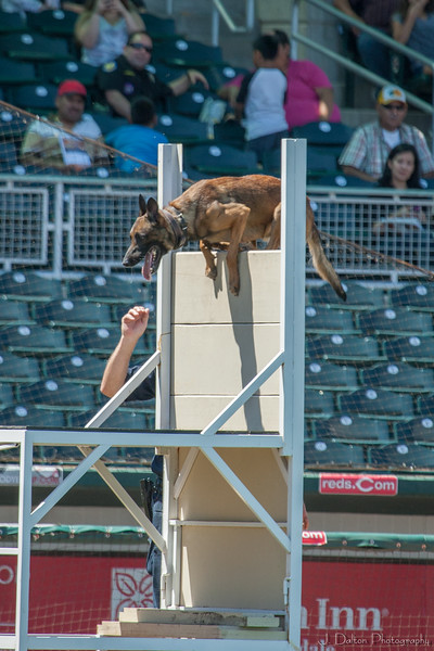 Desert Dog Trials 2016 -132