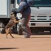 Desert Dog Trials 2016 -158