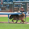 Desert Dog Trials 2016 -65