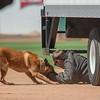 Desert Dog Trials 2016 -144
