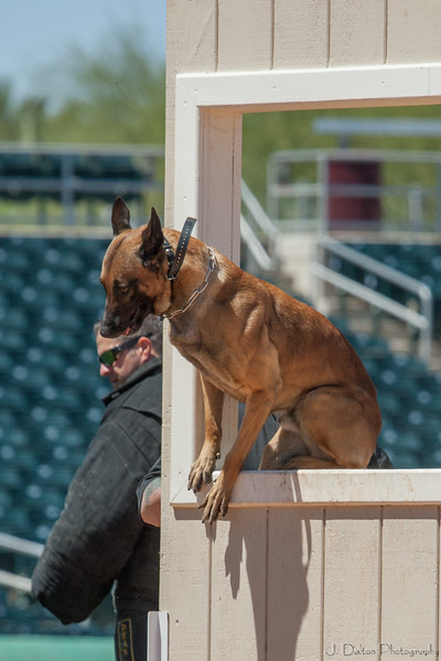 Desert Dog Trials 2016 -120