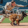 Desert Dog Trials 2016 -139