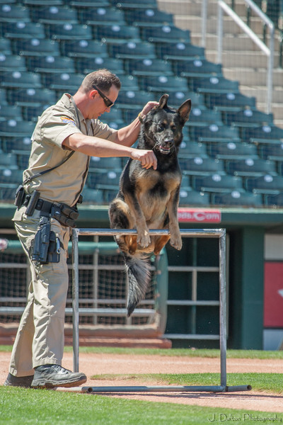 Desert Dog Trials 2016 -123