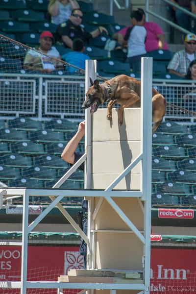 Desert Dog Trials 2016 -131