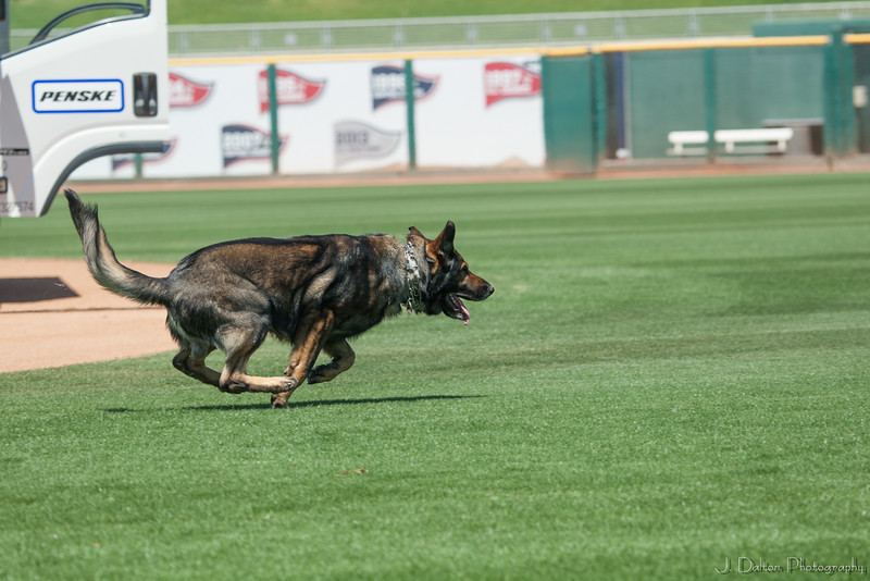 Desert Dog Trials 2016 -89
