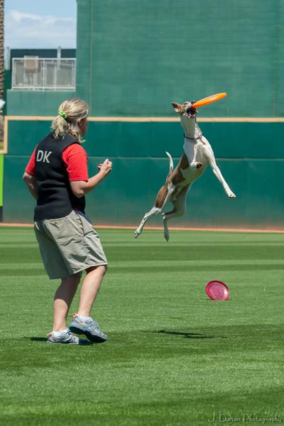 Desert Dog Trials 2016 -116