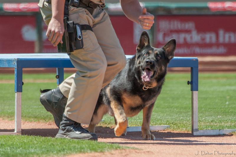 Desert Dog Trials 2016 -124