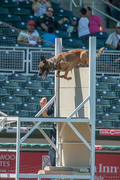 Desert Dog Trials 2016 -133