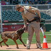 Desert Dog Trials 2016 -99