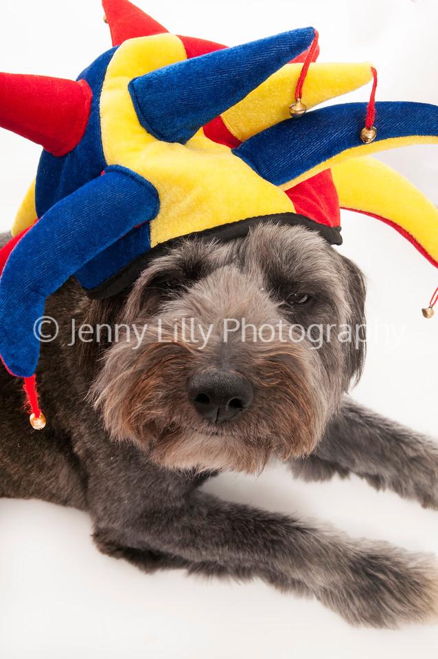 dog wearing Chrismas hat, isolated on white background