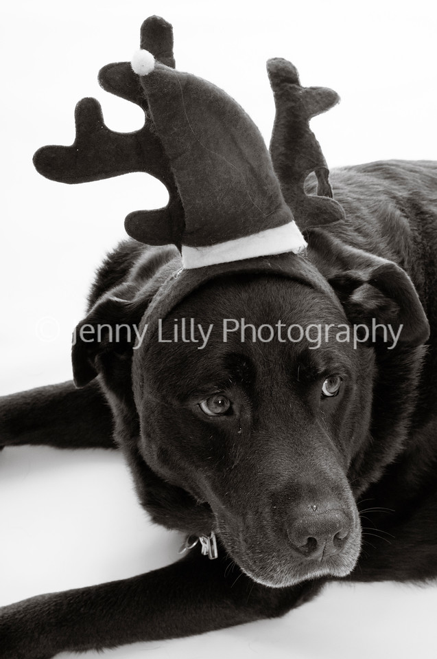 Dog in Christmas hat isolated on white background