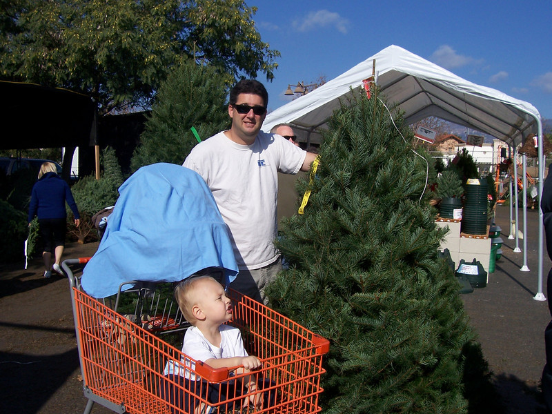 Tree shopping