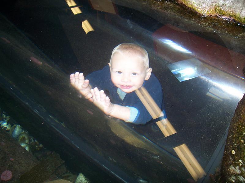 Playing in the walk through aquarium at the SB Sea Center.