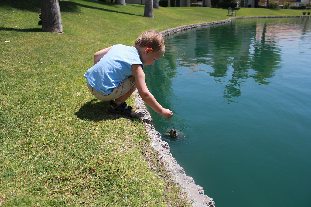 Feeding the turtles