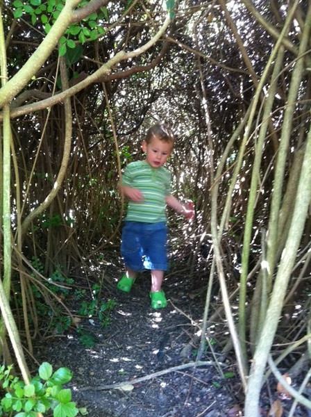 Cam in the bush maze by our house