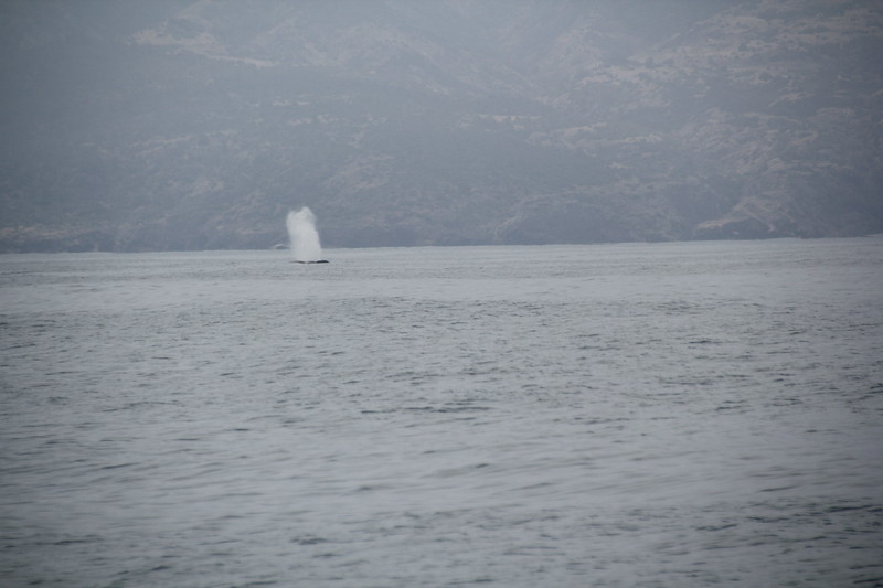Blue Whale by San Miguel Island