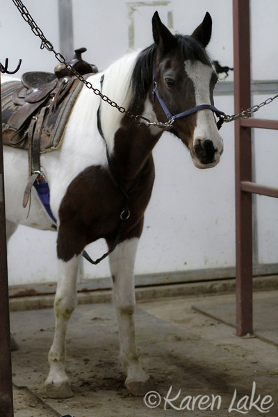 Horse Riding Lessons - Oct 2011