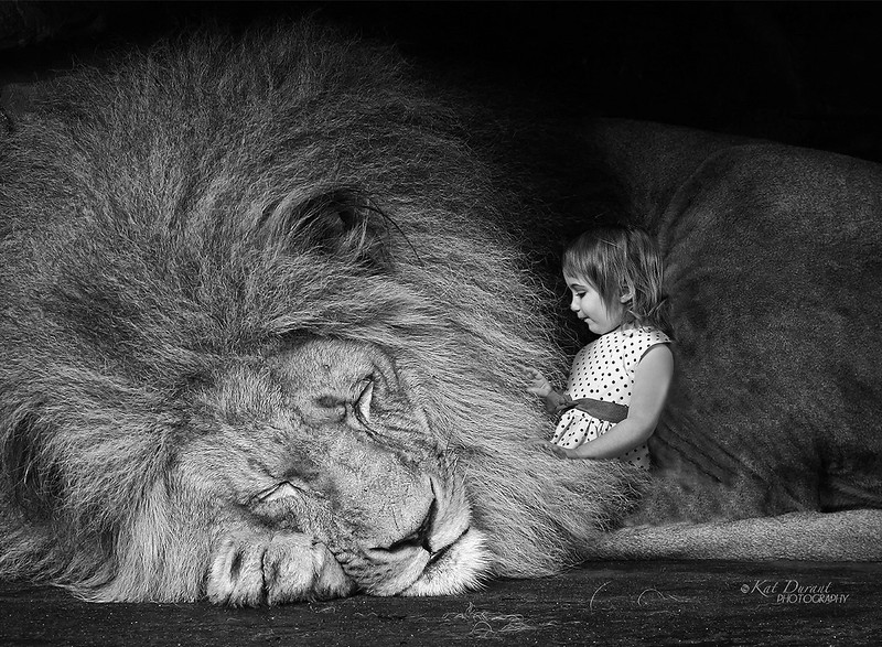 The lion photo is not mine so I can't take credit for it, I borrowed from an online stock photography site.