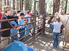 Monday - Horsemanship merit badge. Learning to halter and lead the horses.
