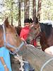 Monday - Horsemanship. Robert J. practices hitching the horse.