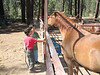 Monday - Horsemanship merit badge. John M and Anthony paired up and were assigned a horse.