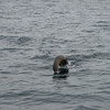 We were also haunted by sea lions, one of which almost took a fish right off Nathanael's hook!
