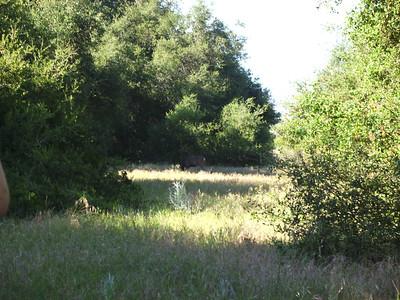 Den Hike Riley Wilderness