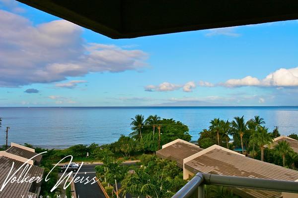 Maui Banyan G501