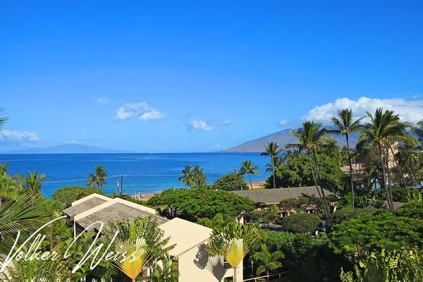 Maui Banyan G502