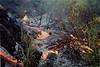 Lava burns forest on 2 October 1999  #KIL1999-5