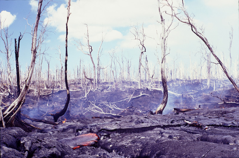 Lava burning the forest in June 2003 #KIL2003-1