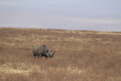 White Rhino -- I think he's smiling