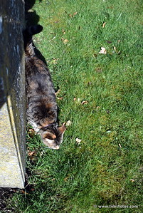 Another Kilkenny cat