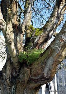Ferns growing in tree