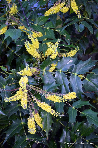 Yellow flowers (flash light)